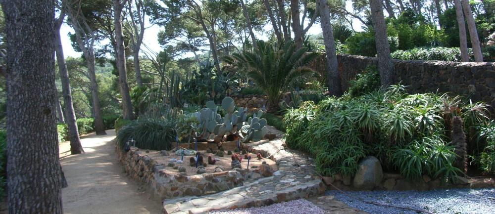El jard n bot nico de calella de palafrugell for Jardin botanico cap roig